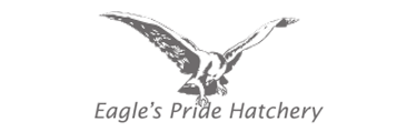 billow clients eagles pride hatchery